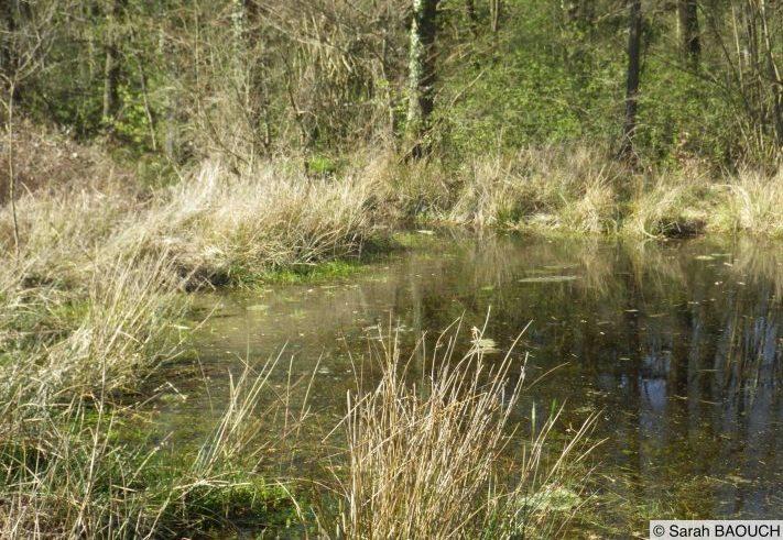 Forêt de Wissembourg
