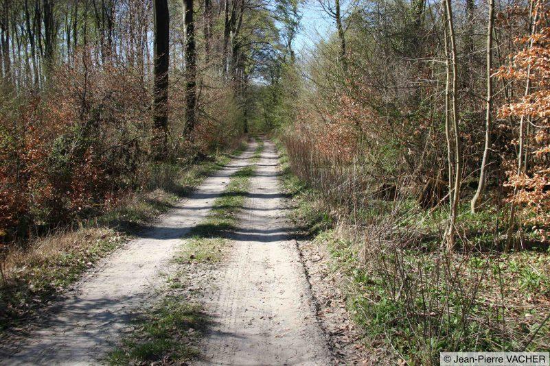 Chemin (habitat terrestre)