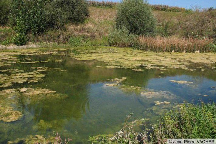 Exemple d'habitat