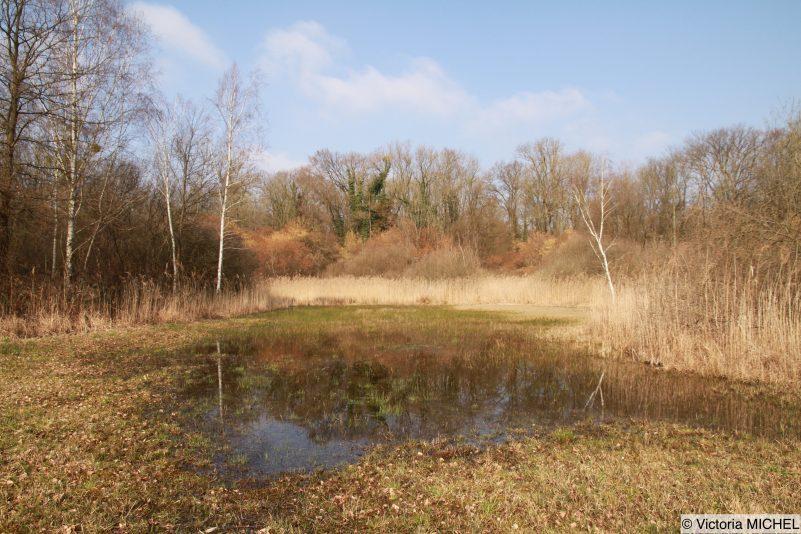 Prairie inondée (Lottel)