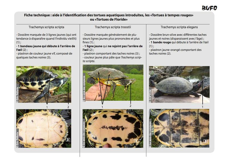 Fiche d'aide à l'identification des tortues exotiques